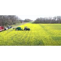 Технология и особенности выращивания озимого рапса.